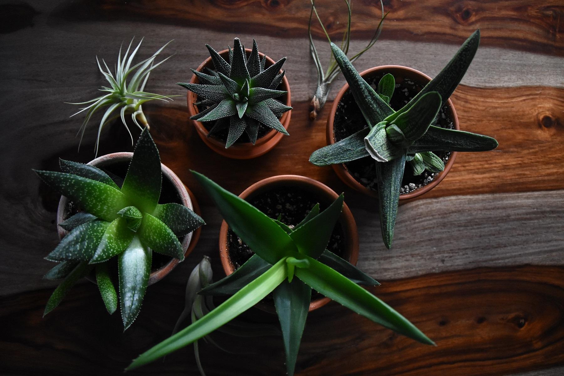 Tarzan Plants
